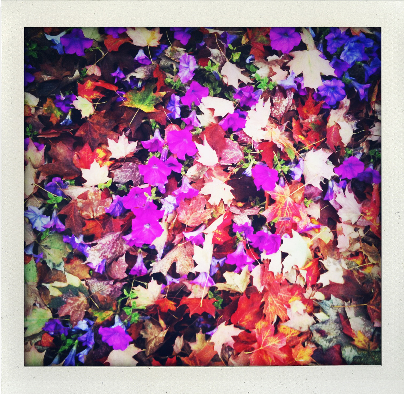 fall flowers&leaves